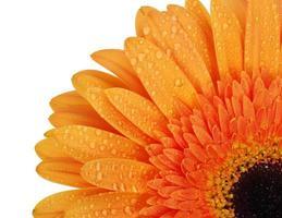 oranje bloem foto