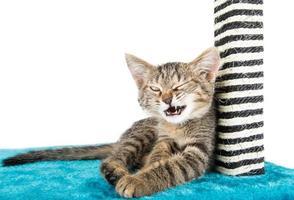kitty knipoogt ligt op het blauwe zachte oppervlak foto
