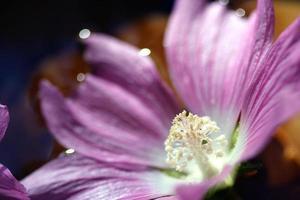 bloemen, wonderkind