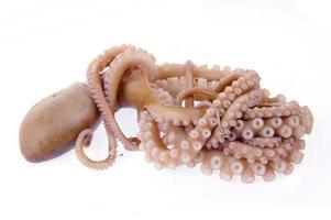 octopus op een witte achtergrond foto