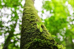 verse groene lentebladeren
