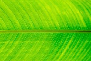 groen blad foto