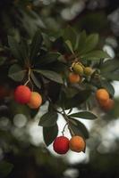 oranje vruchten aan de boom overdag