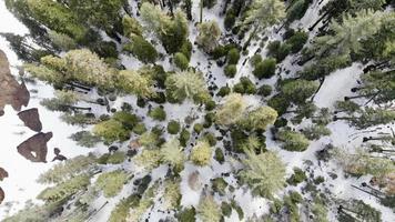 vogelperspectief van hoge bomen