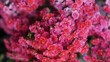 roze bloembos foto