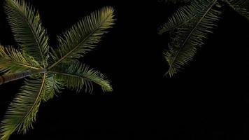 kokospalm 's nachts foto