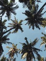 lage hoekfotografie van kokospalmen foto