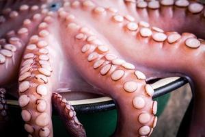 verse octopus in de komclose-up foto