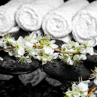 bloeiende takje pruim, witte handdoeken op zenstenen foto