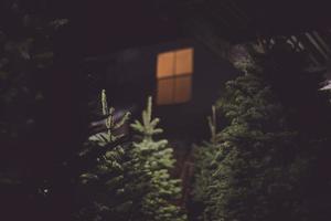 selectieve focus van groene pijnboom foto