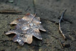 gedroogd herfstblad met waterdruppel foto