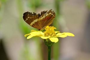 vlinder op gele bloem foto