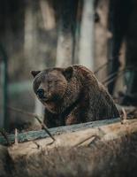 beer in een bos