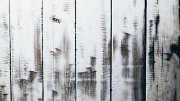 rustiek wit houten oppervlak foto