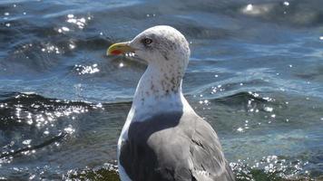 close-up van een zeemeeuw foto