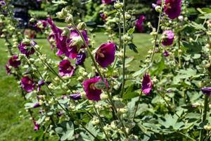 bloeiende paarse bloemen