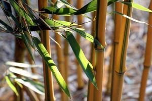 close-up van bamboe foto