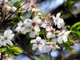 witte bloemen op boomtak foto