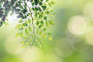 groene bladeren bokeh achtergrond foto