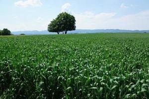landschap in Zollikon foto