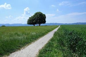 groen veld in Zollikon foto
