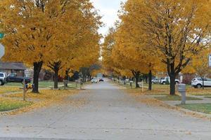 bladeren vallen aan de bomen foto