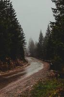 grijze weg tussen groene bomen