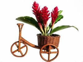 bloemen op een houten fiets foto