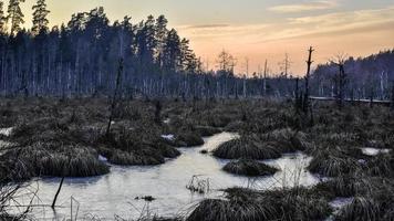 ijzige zonsondergang vijver foto