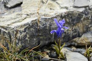 paarse bloem bloesem