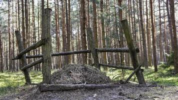 hek in het bos foto