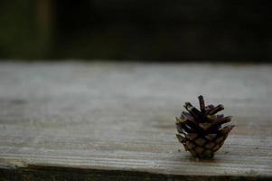 natuurlijke bruine dennenappel foto