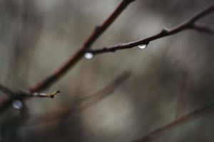 humeurig bos regendruppels