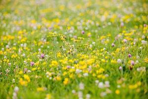 geel bloemenveld gedurende de dag
