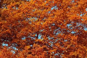 herfst boom gebladerte