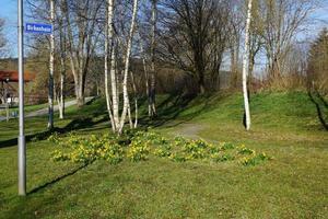 klein park in het voorjaar