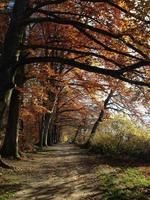 weg in het bos foto