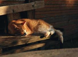 kat rusten op een veranda in avondlicht foto