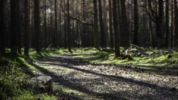 pad door het bos foto