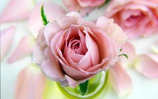 roze bloem in een glas
