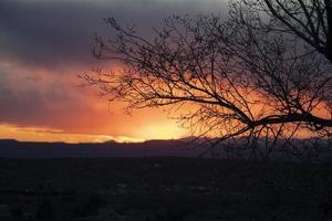 zonsondergang achter silhouet van takken