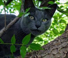 binnenlandse kat in een boom