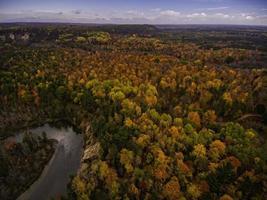 luchtfoto van groene en bruine bomen