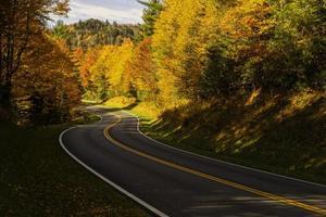 weg met herfstbomen foto