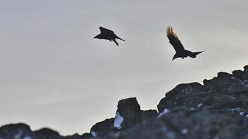twee raven die op een rotsachtige kust vliegen
