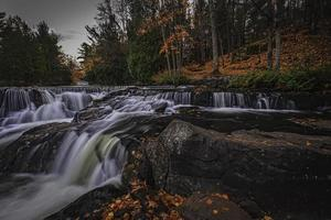 stromende rivier in een bos