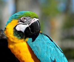 ara papegaai portret