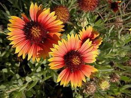 levendige wilde bloemen foto
