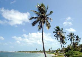 palmbomen op het strand in key west foto