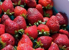 verse, heerlijke aardbeien